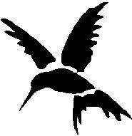 31. Kolibri