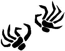 10. Csontváz kéz   Új!